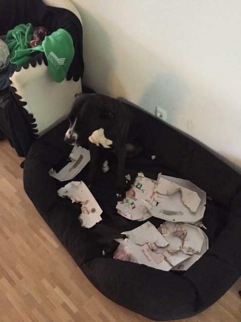 Hund packt Mülltüte aus