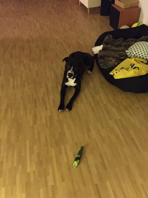 Hund packt Einkaufstüte aus