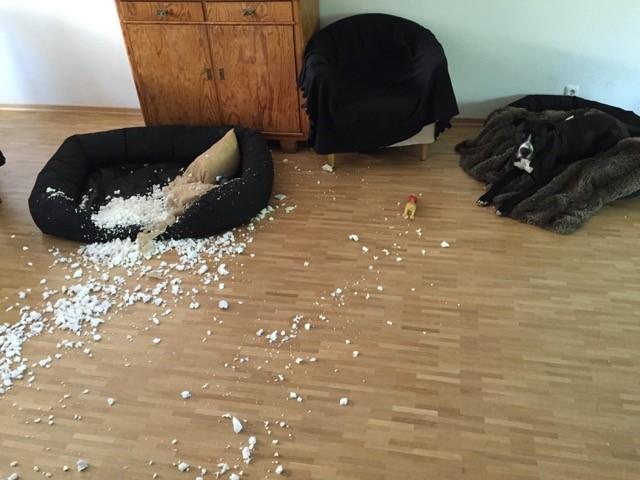 Hund zerkratzt Hundekörbchen