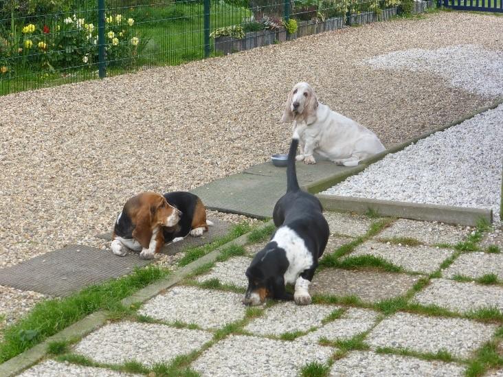 Hunde entspannen sich