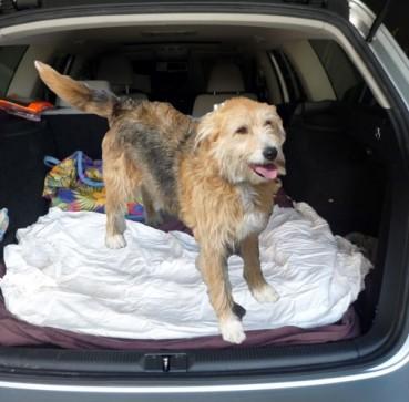 Bonny über Autohunde und Reisekatzen