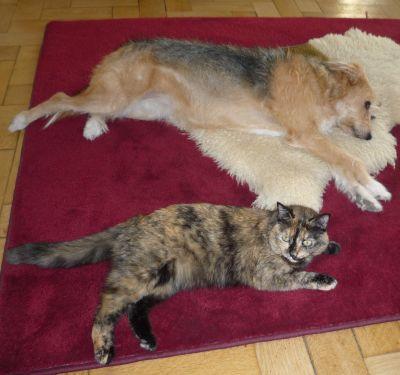 Hund und Katze zuhause