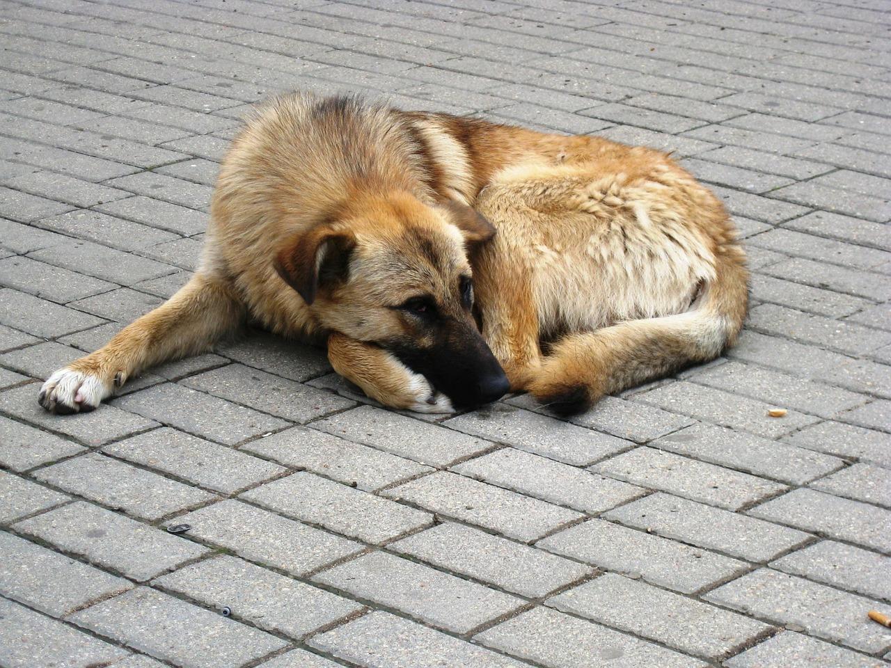 """TotFundHund, denn """"kein Hund soll auf der Strecke bleiben"""""""