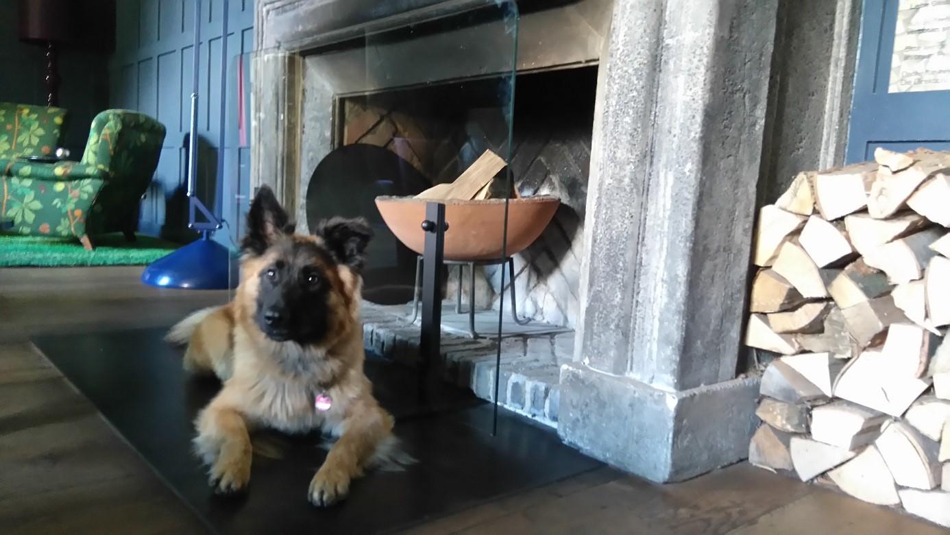 hundehotel kranzbach