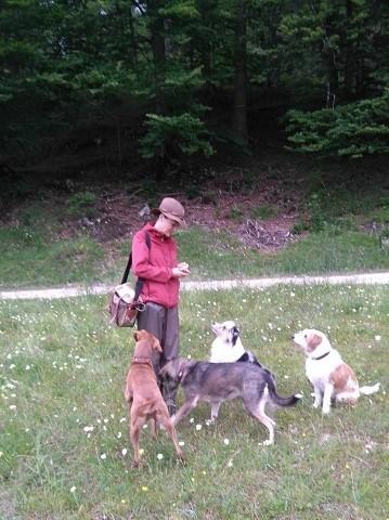 hundetrainerin sylvie neumaier