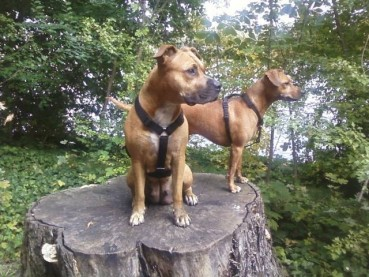 Lotte & Nino Hundetagesstätte – Gründerportrait & Crowdfunding-Aufruf