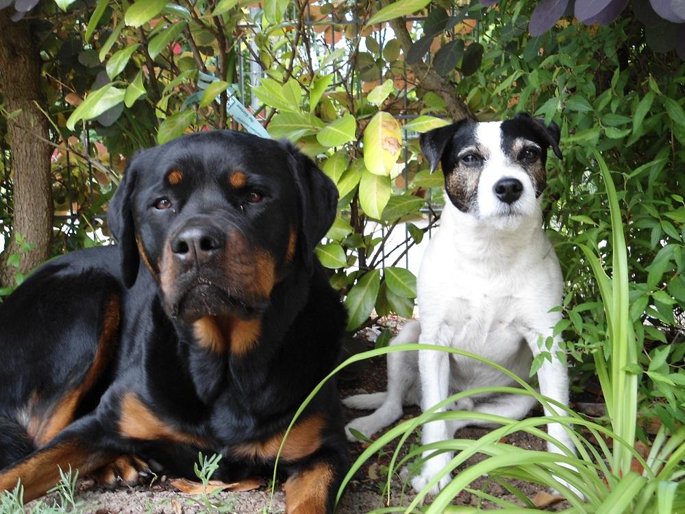 zwei Hunde im Busch