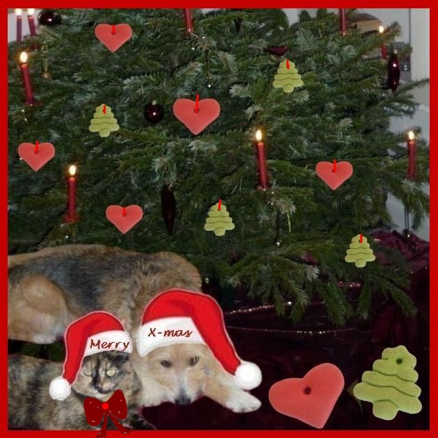 Weihnachtskarte mit Hund und Katze