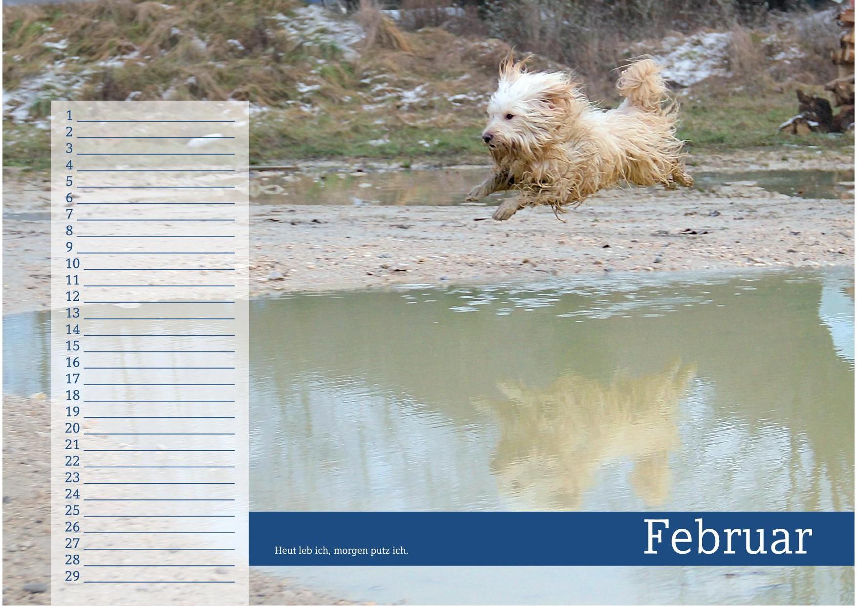 Februar - schmutziger Hund springt durch Wasserschlamm