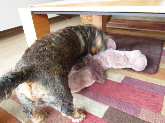 Hund spielt mit Plüschtier