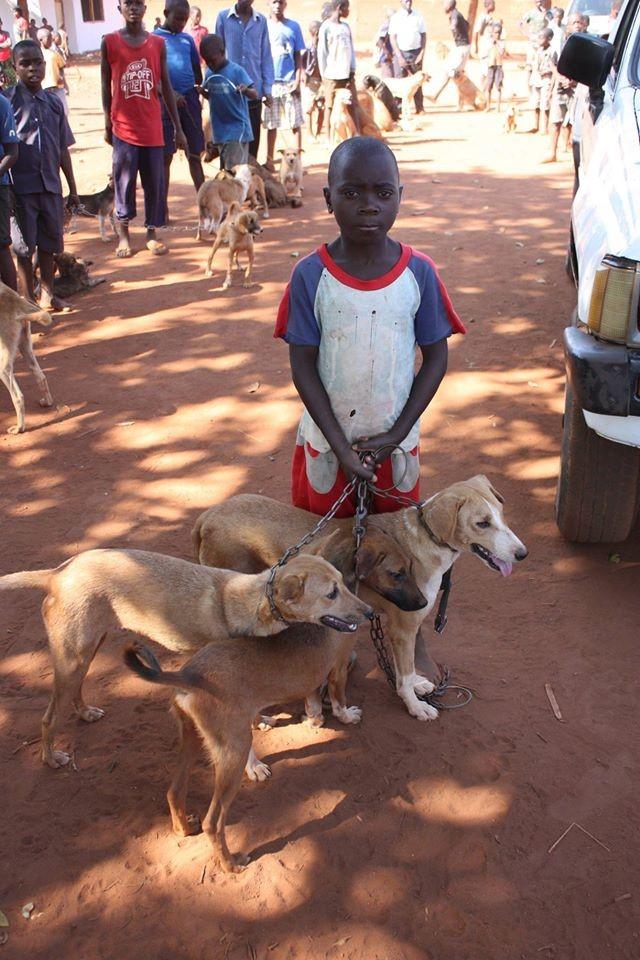 afrikanischer junge mit hunden