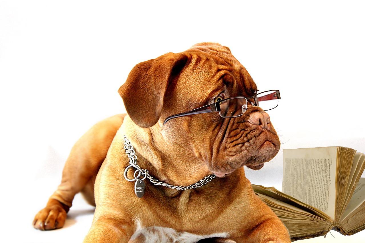 Wie intelligent ist dein Hund? Wirklich?