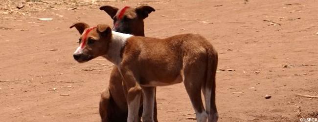 geimpfte hunde