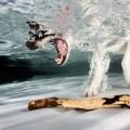hund unter wasser taucht nach stöckchen