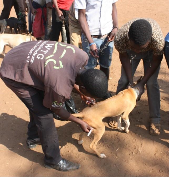 hunde impfkampagne afrika