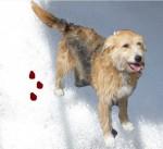 bonny im schnee mit blut