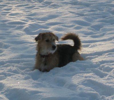 bonny versinkt im schnee