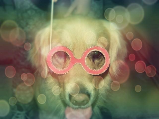 Promi Hund: Ich bin ein Star, holt mich hier raus?