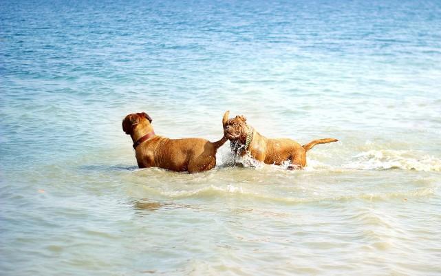 Hunde am Strand für Kurzurlaub
