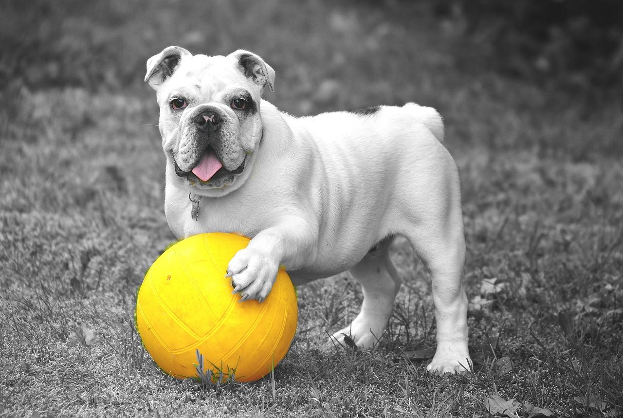 Hundespielzeug – das eigene Tier unterbewusst trainieren