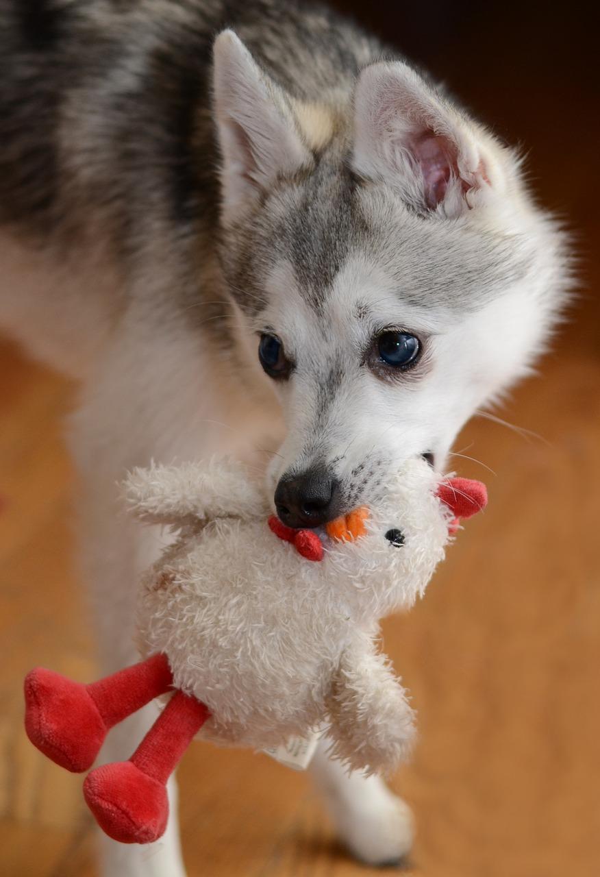 Hund mit Plüschtier
