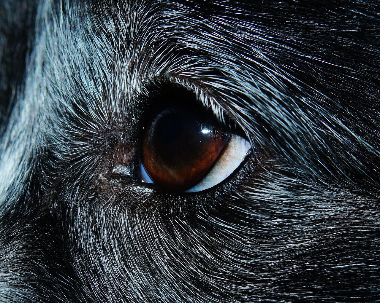 Seltene Hunderassen – Ein kurzer Überblick