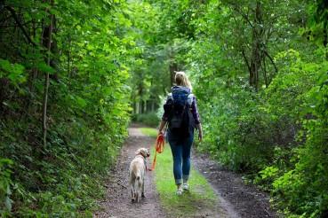 Der Waldspaziergang – Entspannung für Mensch, Hund & Waldbewohner?