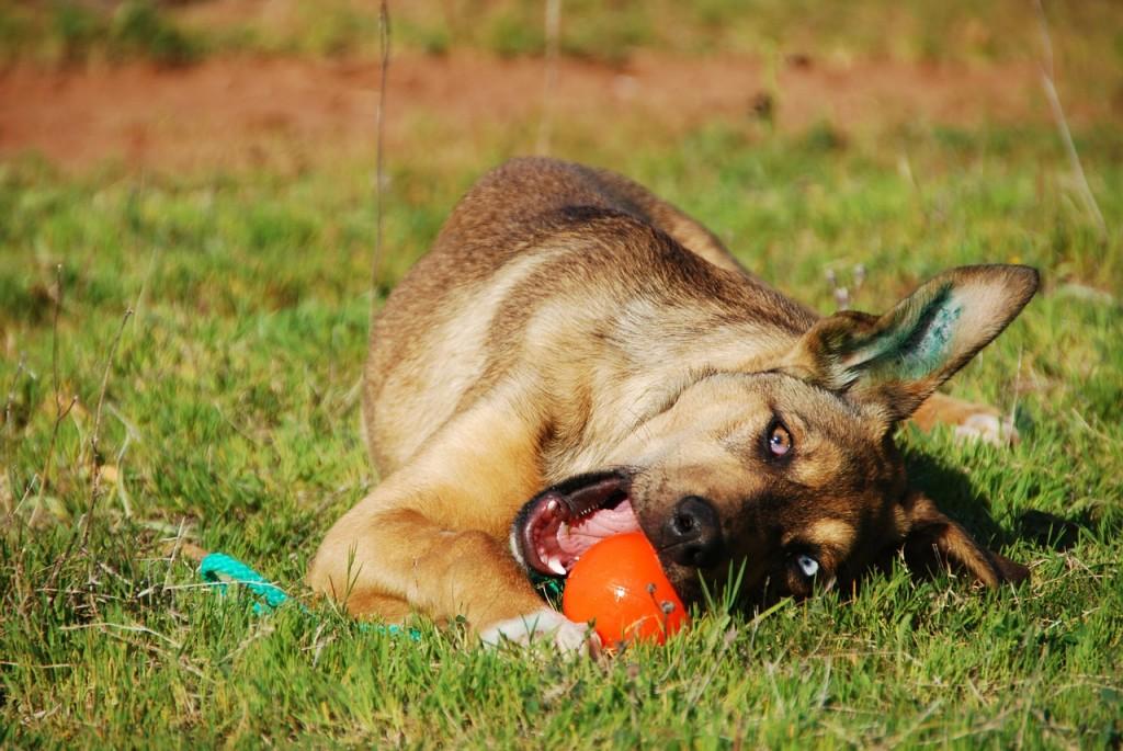 Hund spielt mit Ball an Stange