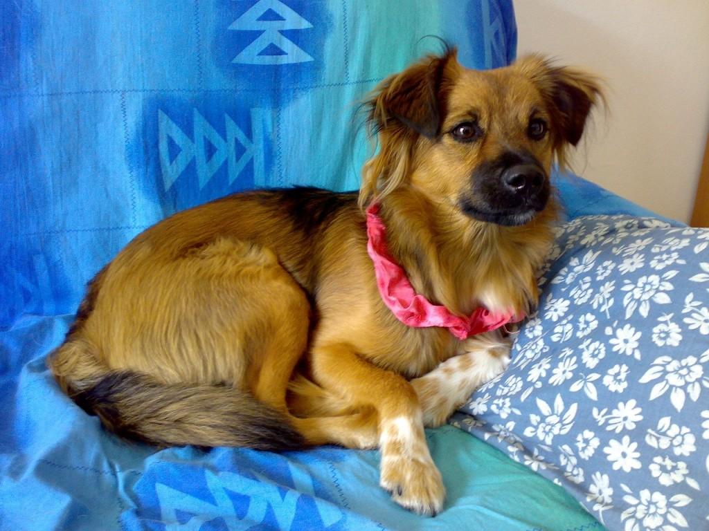 Hundetherapeut - Hund auf Sofa