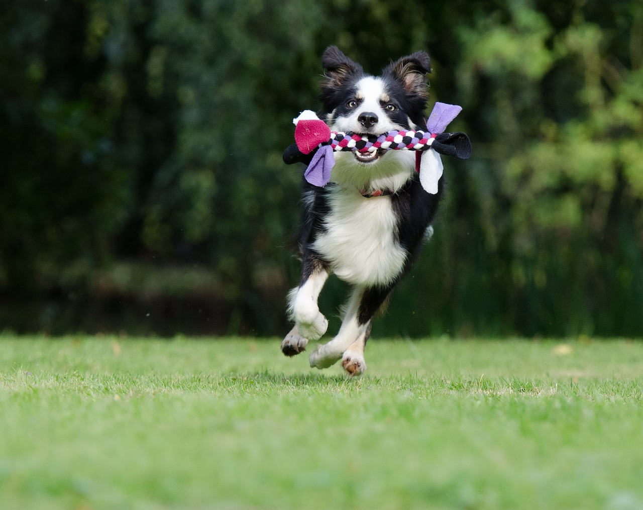 Hund mit Spieltau als Hundespielzeug