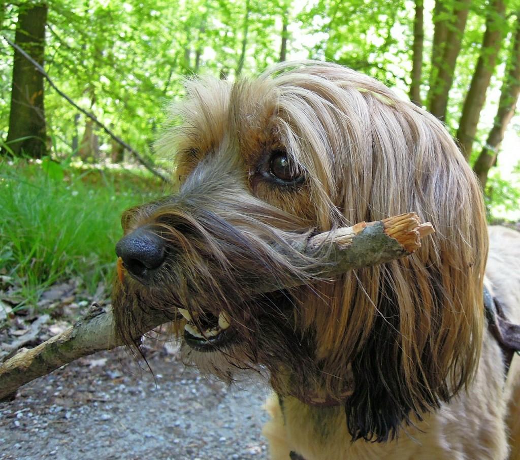 Hund mit Stöckchen im Maul