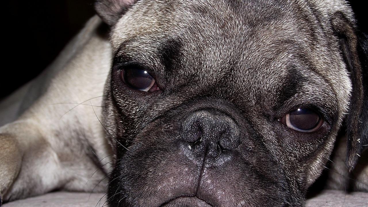 """Das Leid der Vermehrerhunde und der """"billigen"""" Welpen"""