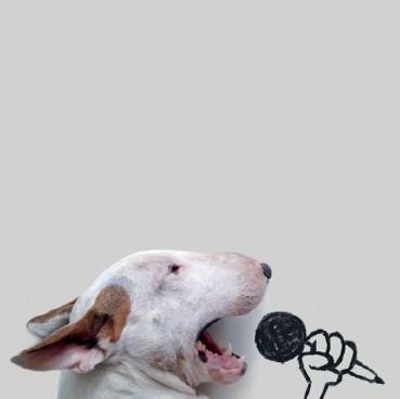 Ein Hund namens Jimmy – Leseprobe