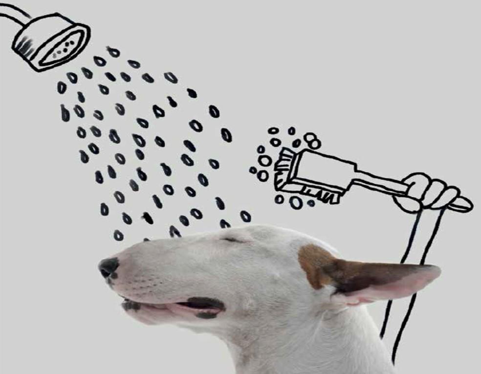 jimmy duscht