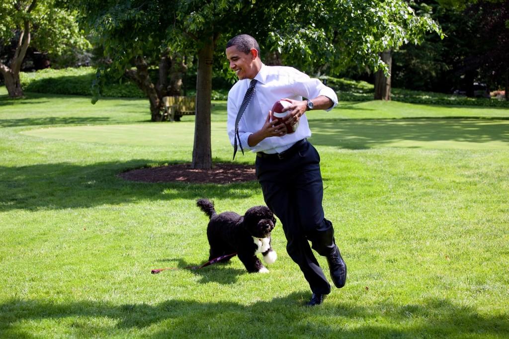 Hund von Präsident Obama