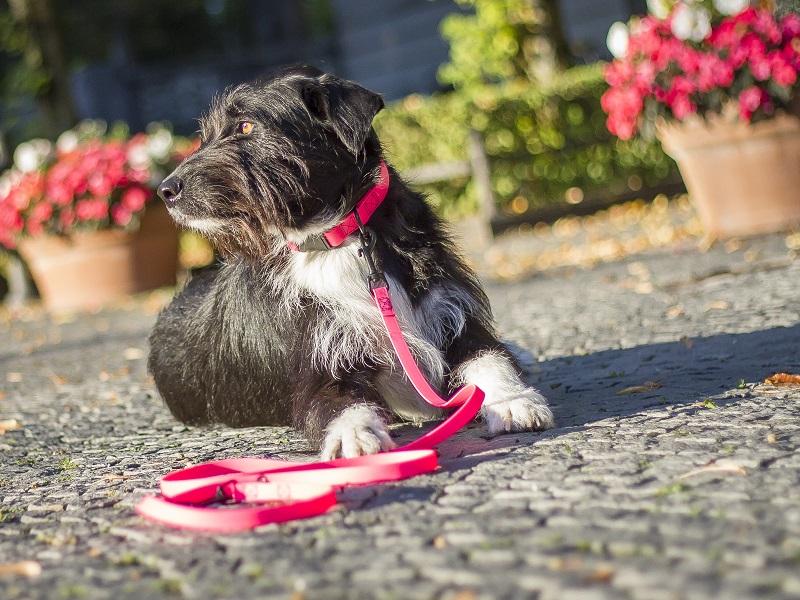 verstellbare Hundeleine aus Biothane neonpink treusinn