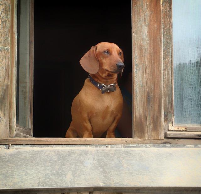 Spontan ins Krankenhaus – Wer denkt an die Versorgung meines Hundes?
