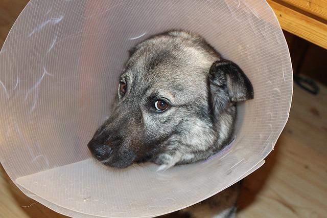 Hunde OP Versicherung, denn wenn es dem Hund weh tut… *Sponsored Post