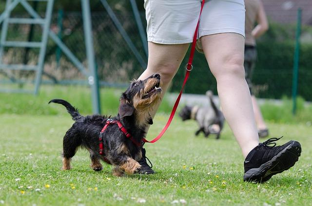 Die 3 größten Mythen über Hunde: Teil 1 Überblick