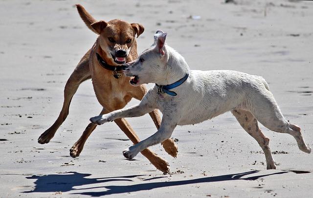 Die 3 größten Mythen über Hunde – Teil 2: Dominanz
