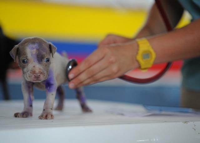 Tierärztliche Vorsorge beim Hund – damit der vierbeinige Freund gesund bleibt