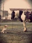 Hund und Pferd auf der Koppel - vergilbt
