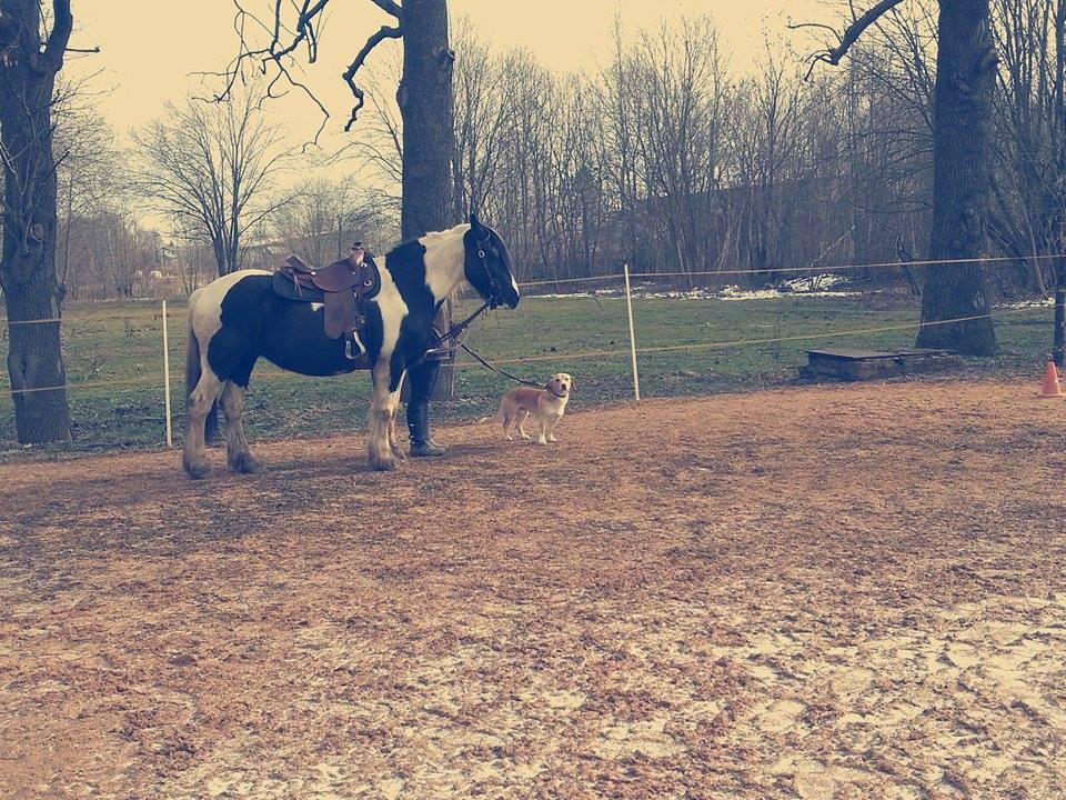 Hund und Pferd auf der Koppel