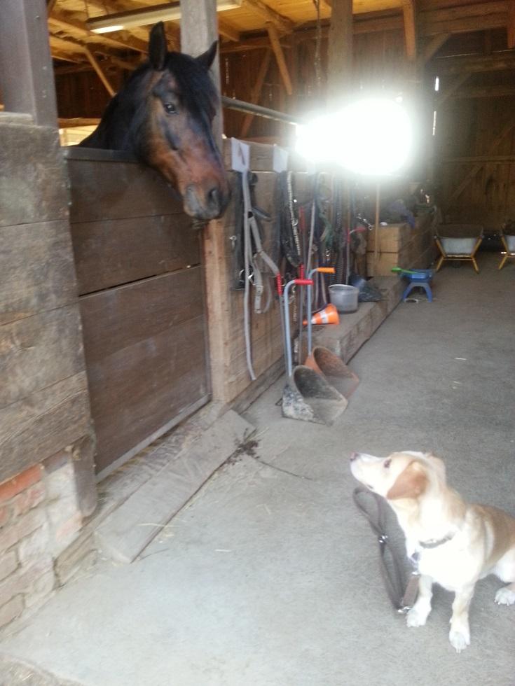 Hund im Reitstall