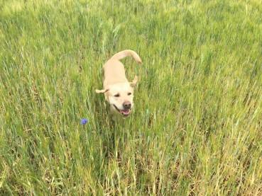 11 Tipps – für einen zuverlässigen Rückruf –  oder wie Sie Ihren Hund zukünftig wieder am Gesicht statt am Popo identifizieren – Teil 2