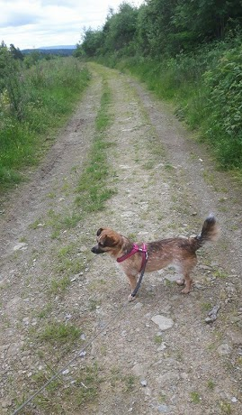 So geht es also zu bei der Hundeanschaffung – ein schonungsloser Blick hinter die Kulissen