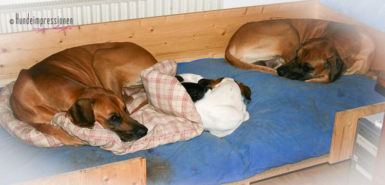 drei hunde im körbchen