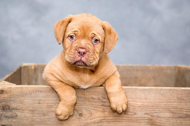 Achtung Satire: Der Hund als Flirthilfe oder: Warum Sie sich vielleicht doch besser einen Audi kaufen