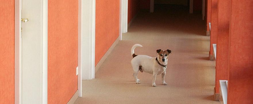 Hundehotel Westerland Sylt