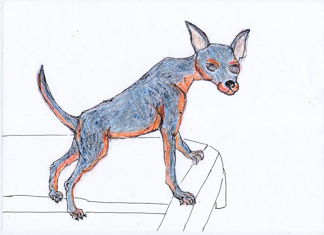 mäxchen blue als junghund